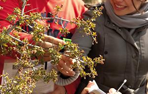 <p>IV Jornadas Biodiversidad, Paisaje y Territorio<br /> L&iacute;mites del crecimiento y transici&oacute;n urbana<br /> <br /> Del 1 al 7 de abril de 2019</p>  <p>Alcal&aacute; de Henares</p>